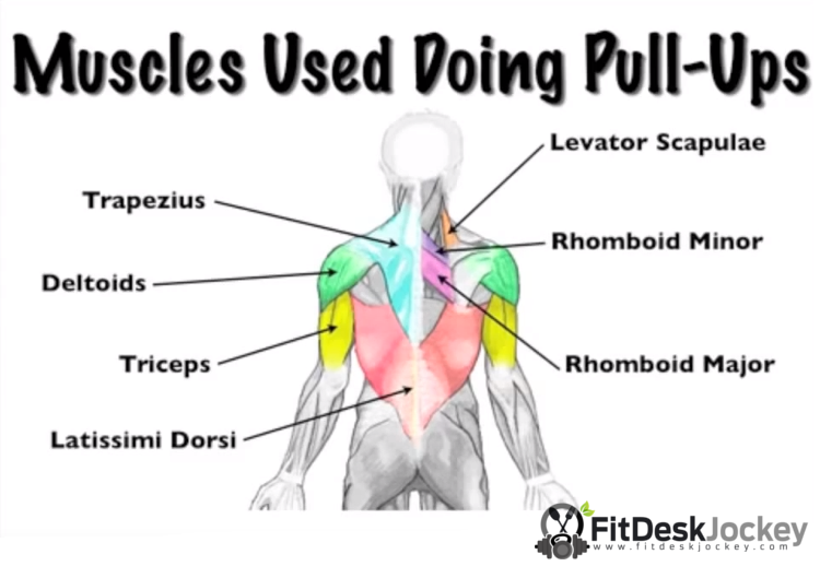 Complete Pull Up Muscles Worked Chart
