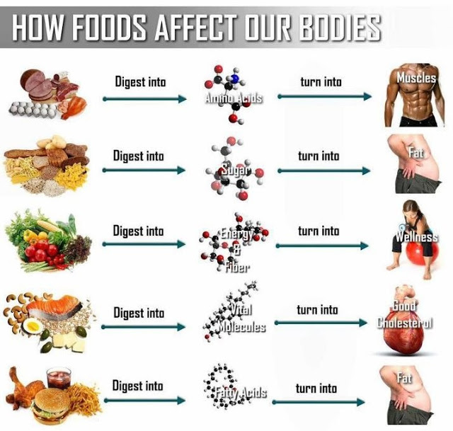 How Junk Foods And Healthy Food Effect Your Body